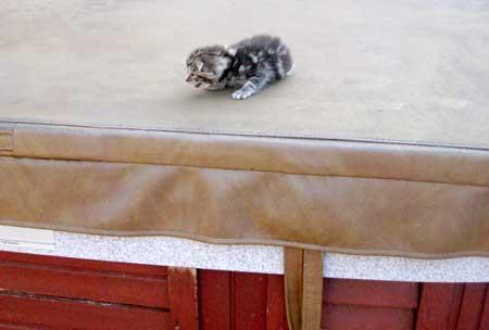 kitty-on-spa.jpg