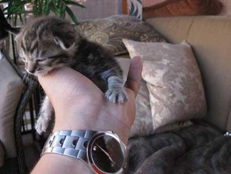 Kitten in Socrates Palm